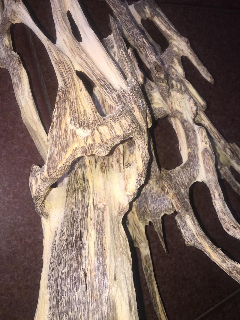 trầm hương rừng tự nhiên